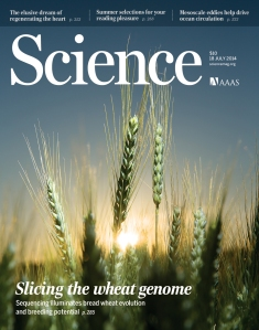 Science Wheat cover July 17 2014 140718HR